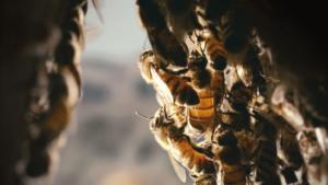 abeilles-300x169